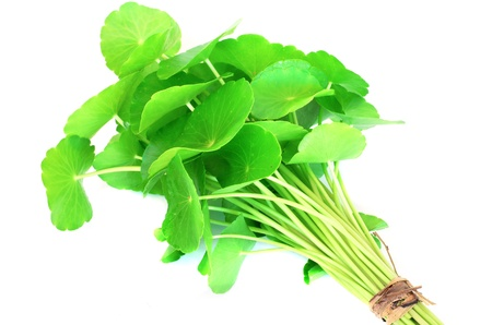 subcontinent: Herbal Thankuni leaves of indian subcontinent Stock Photo