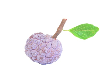 scaly custard apple: Annona purple white background.