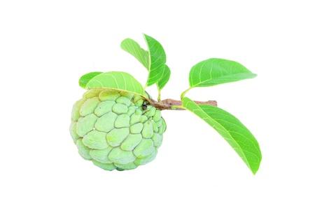 sweetsop: Custard apple su sfondo bianco Archivio Fotografico