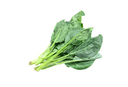 Kale on white background