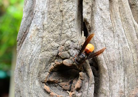 hymenoptera: Hymenoptera Stock Photo