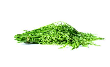 vibrat color: cha-om Vegetables