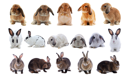 Adorable rabbit isolated on a white background  Banco de Imagens