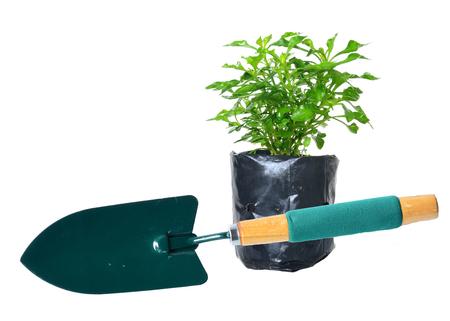 Watercress and Garden trowel  photo