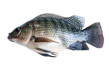 Fresh fish isolated on a white background  photo