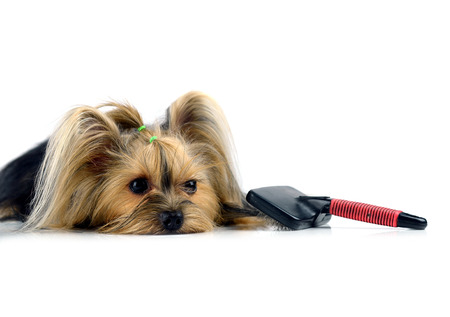 care for dog hair. isolated on white background Stock Photo - 27228943