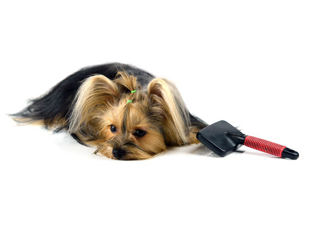 care for dog hair. isolated on white background Stock Photo - 27228947