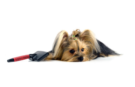 care for dog hair. isolated on white background Stock Photo - 27228949