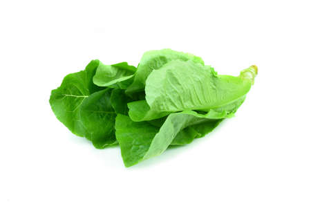 Cos Lettuce on White Background photo