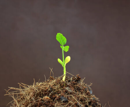 seedling Isolated on brown background photo