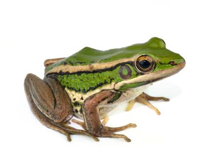frog egg: frog