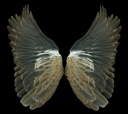 Bird wings Reklamní fotografie