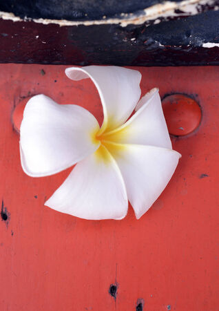 Plumeria flower Isolated on red wood photo