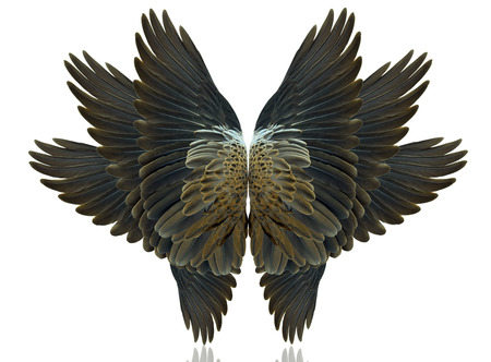 bird wings: Bird wings isolated on white background