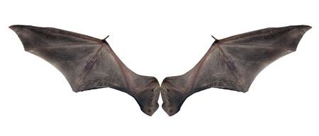 at bat: alas de murciélago Foto de archivo