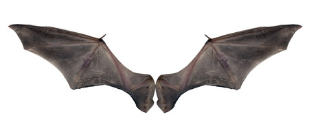 bat wings Stock Photo