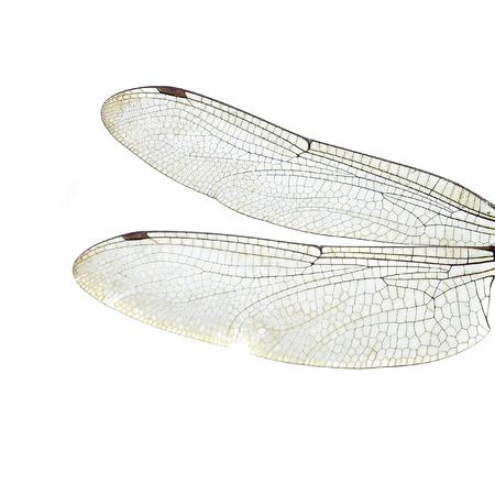 dragonfly wings Standard-Bild