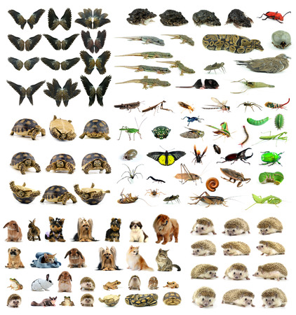 collection animal isolated on white background photo