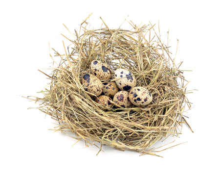 Urban birds nest with three eggs inside, isolated on white. photo