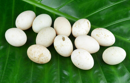 pigeon egg: Eggs on leaves Stock Photo