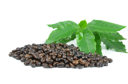 coffee beans with leaves on white background photo