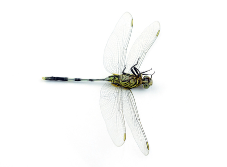 Dragonfly isolated on white background photo