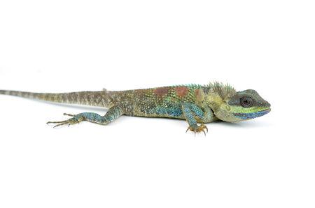 prin: Lagarto azul con los ojos grandes en detalles cerradas arriba, como pequeño reptil con detalles agradables en su cuerpo pintado