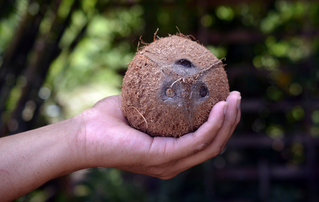 Coconut on hand photo