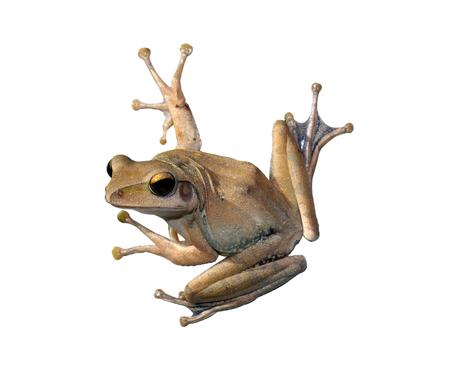 outumn: tree Frog Stock Photo