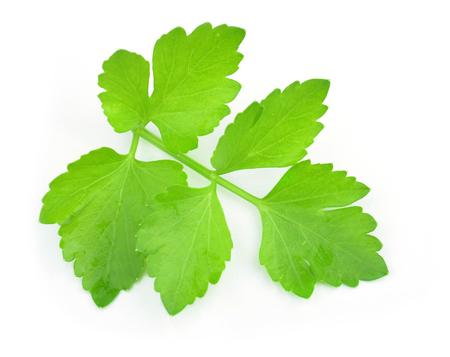 culantro: Ramita de cilantro aislados en blanco Foto de archivo