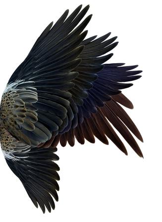 bird wings: wing