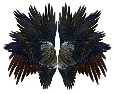 wing Isolated on white background Standard-Bild
