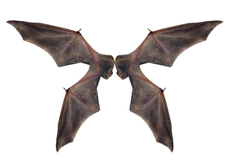 bat wings  isolated on white. Stock Photo