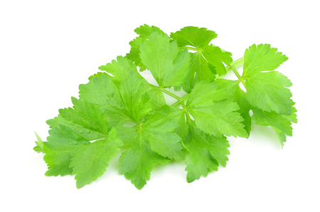 Coriander sprig isolated on white Banco de Imagens