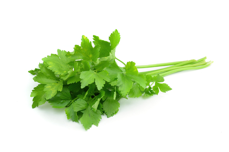 branches and leaves: Coriander sprig isolated on white Stock Photo