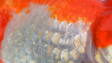 escamas de peces: textura de escamas de pescado de cerca Foto de archivo