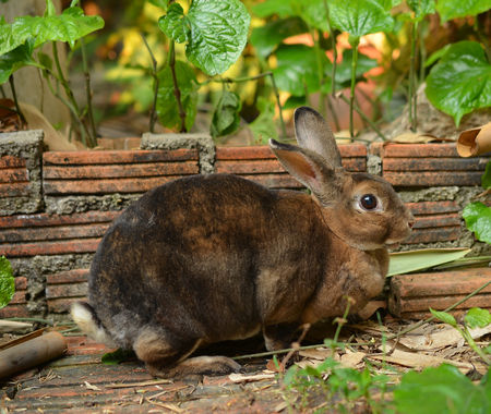 The Brown Bunny photo