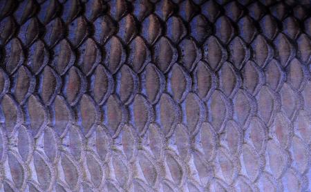 escamas de pez: la textura de escamas de pescado Foto de archivo