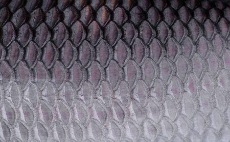 escamas de peces: La textura de escamas de pescado