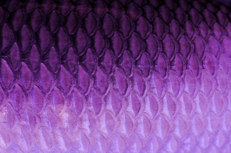 fish scales: Texture of fish scales