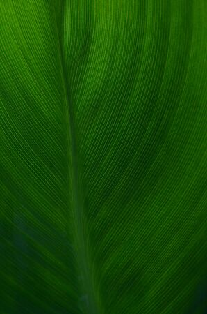 green leaves background 版權商用圖片