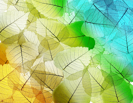 leaves texture background