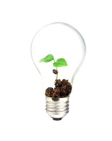 small lamp: light bulb with tree Stock Photo