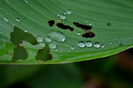 Water on leaf