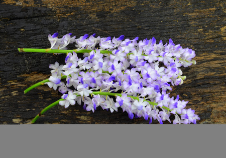 Purple orchids on a wooden floor Stock Photo