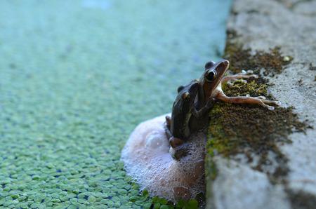 spawn: Frog spawn