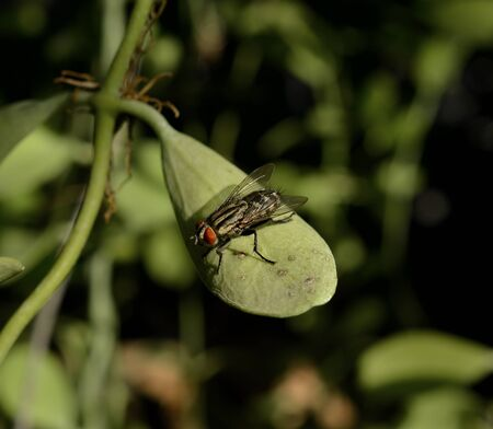 unhygienic: Fly on leaf