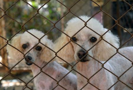 humane: Dog cage Stock Photo