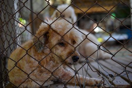 caged: Sadly caged dog