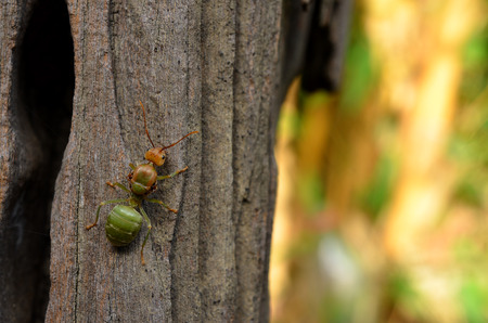 soliciting: Ant to climb a tree, background